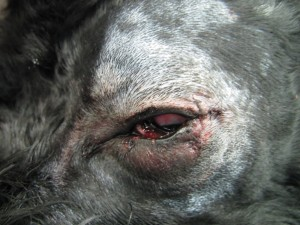 201306011_eye_surgery03