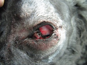 201306011_eye_surgery04