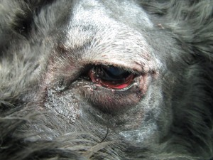 20130611_eye_surgery05