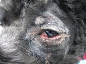 20130625_eye_surgery01