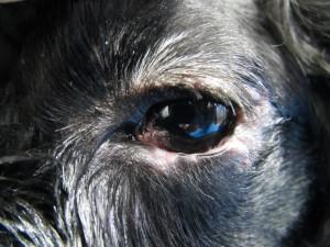 20130625_eye_surgery02