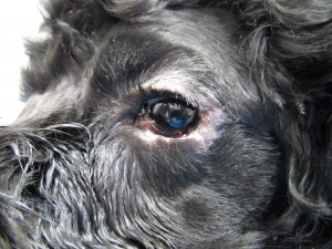 20130625_eye_surgery03