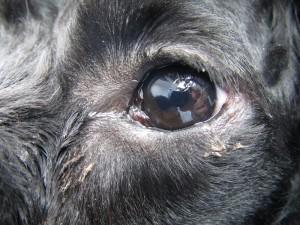 20130625_eye_surgery04
