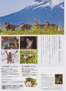 cat_photo02